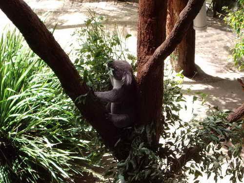 jan_09-taronga_zoo-104