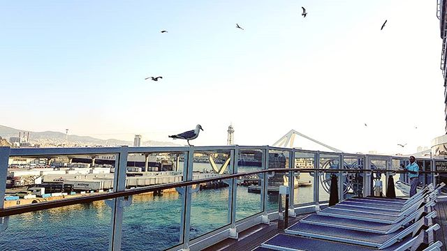 The seagulls give to Us their welcome in Barcelona #mscseaview #msccruises #cruising #cruise #crew #sailing #travel #traveling #traveler #instatravel #instago #instagood #trip #photooftheday #instapassport #instatraveling #mytravelgram #travelgram #travelingram #igtravel #instalife #travelblog #sea #travelstoke