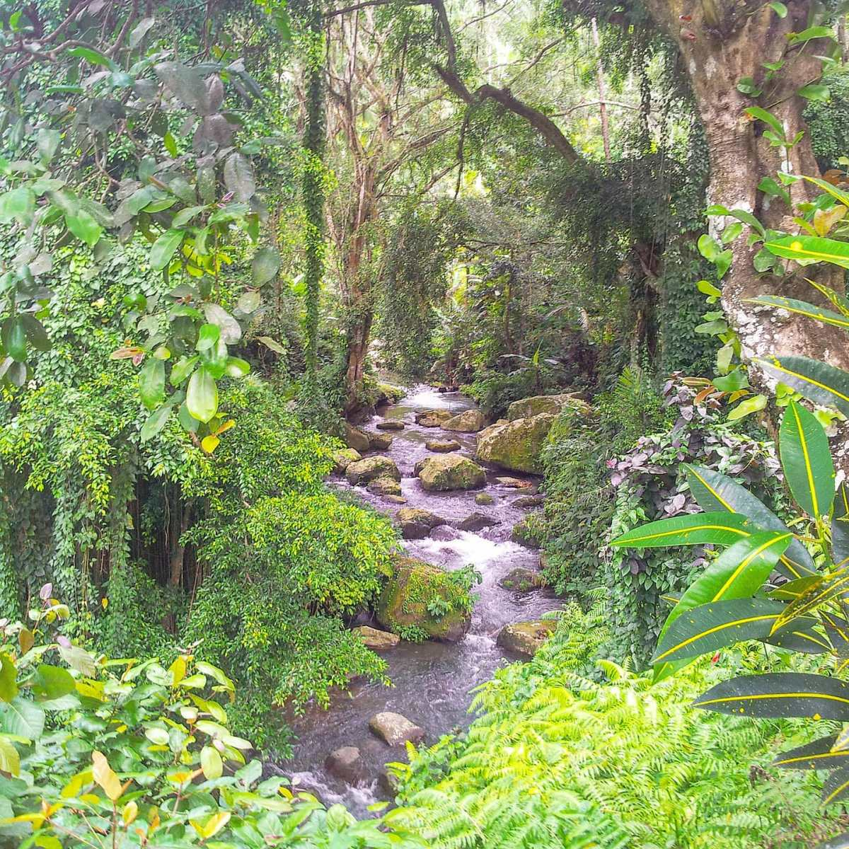 Listen the vibes of nature 🏞️🤙 Gunung Kawi, Bali 2013#indonesia #naturephotography #travellife #travelingram #nature #traveling #travelling #travelawesome #travel #travelgram #traveladdict #forest #travelers #bali #travelphoto #green #travelholic #river #travels #trees #travelstoke #travelmore #traveldeeper #travelpics #traveler #travellers #travelphotography #traveller