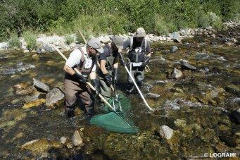 Pêche tacons sur l'Allier en amont de Langogne (Lozère)