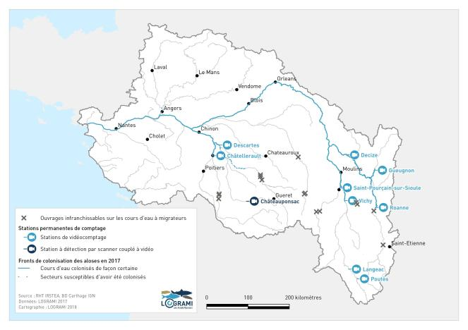 Fronts de colonisation des aloses sur les cours d'eau du bassin de la Loire en 2017