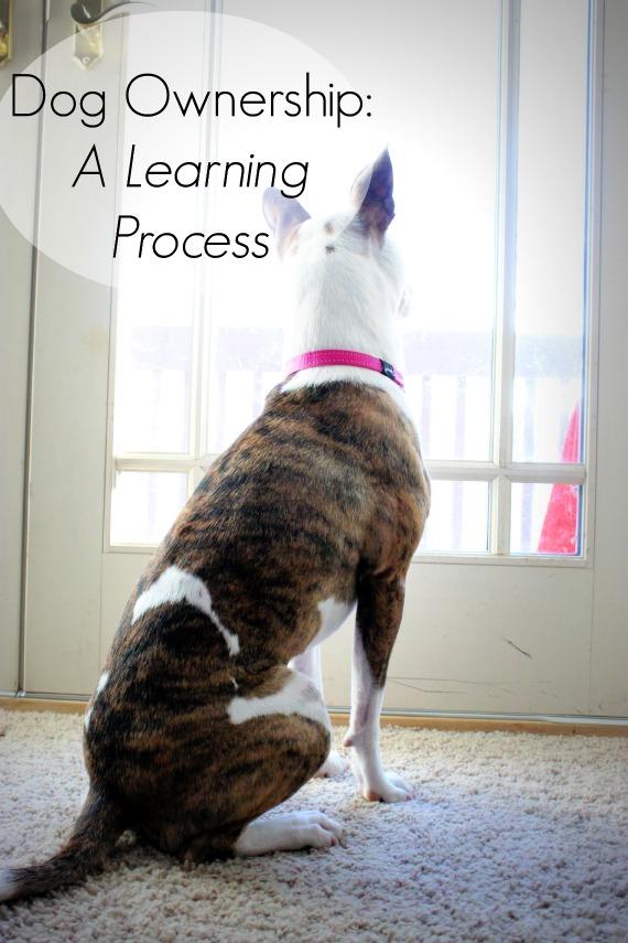 Dog Ownership - Sarah Lukemire - lolathepitty.com
