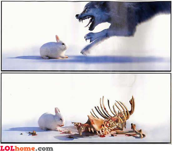 bad hare