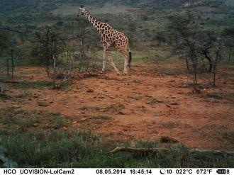 IMAG0414 - Giraffe