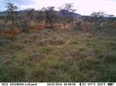 IMAG3120 - Impala, Bright's gazelle, zebra, giraffe