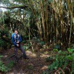 Jérôme parmi les bambous