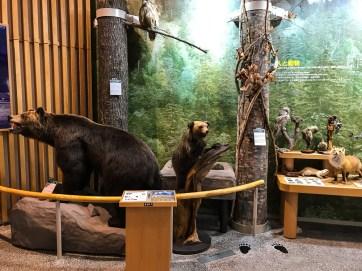 Expo du Visitor Center du Parc Daisetsuzan