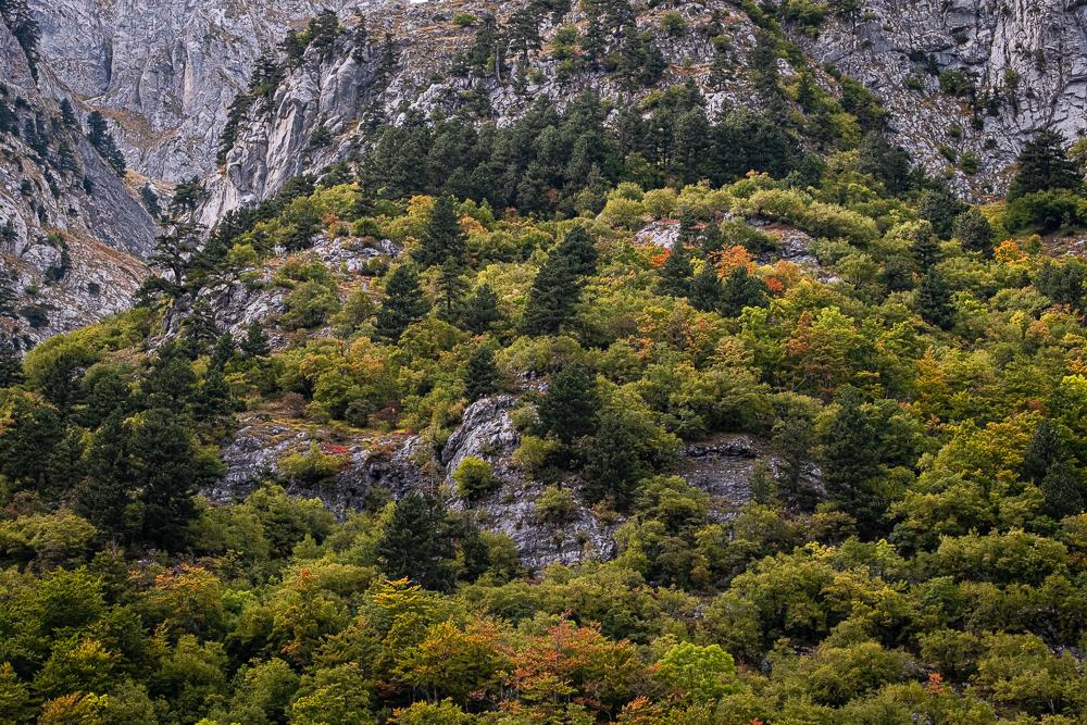 L'automne et ses belles couleurs s'installent