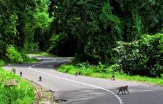 Baun Pusuk Forest