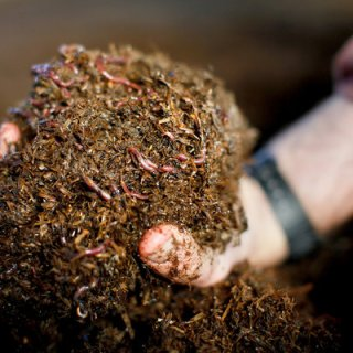 Lombricoltura, ecco cosa fare per avviare un piccolo allevamento