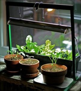Indoor Vegetable Garden Http Lomets Com