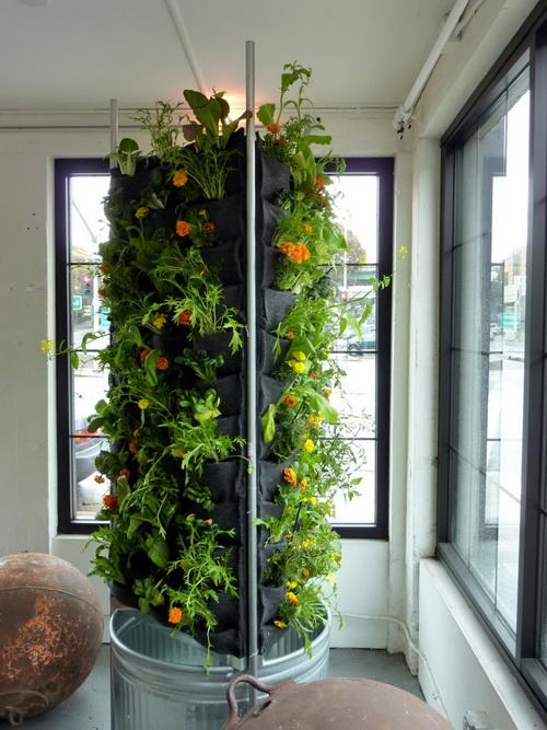 Small Plants Grow Indoors
