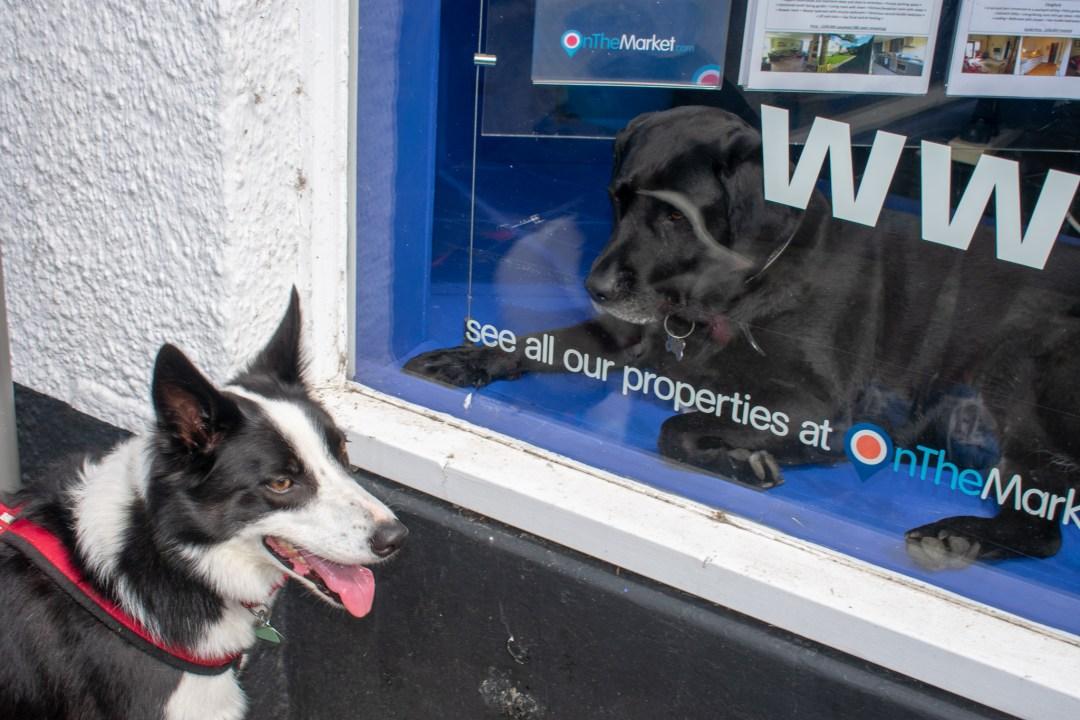 Dog Friendly Days Out in Devon Chagford