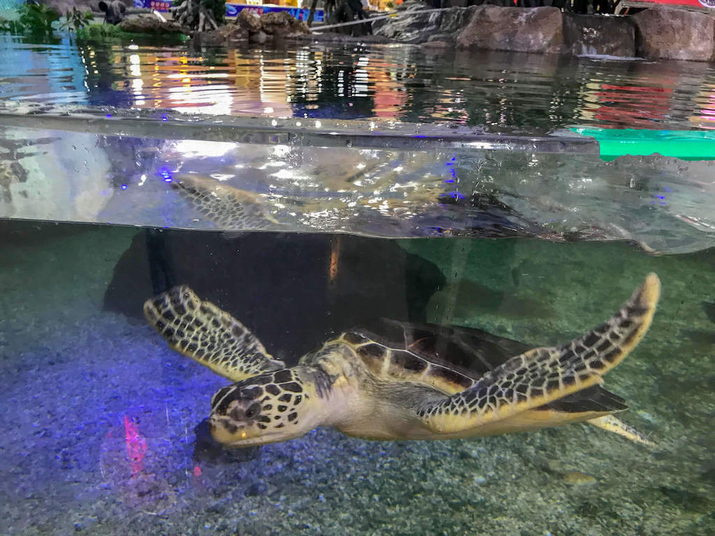 Turtle pond inside a shopping mall in Guiyang China