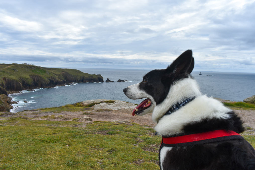 Dogs in Lands End Cornwall