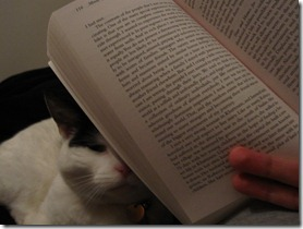 Cats not to happy with the book
