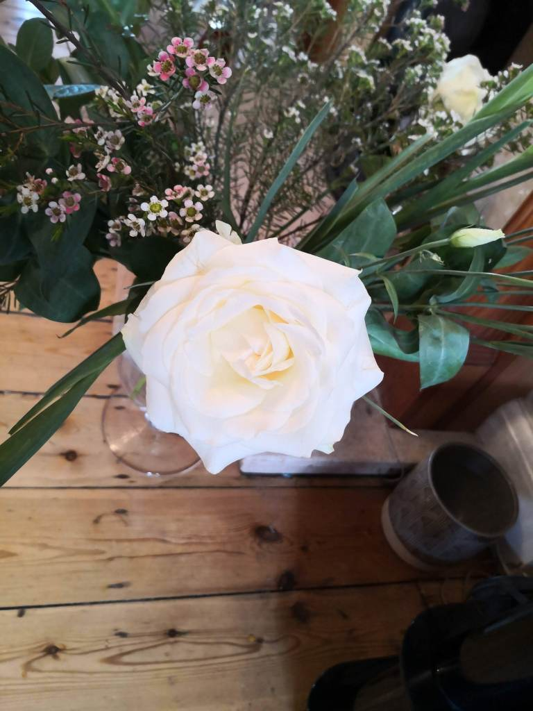 Freddie's Flowers Avalanche rose