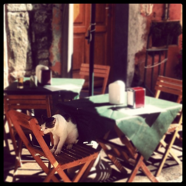 Another kitty in Vernazza