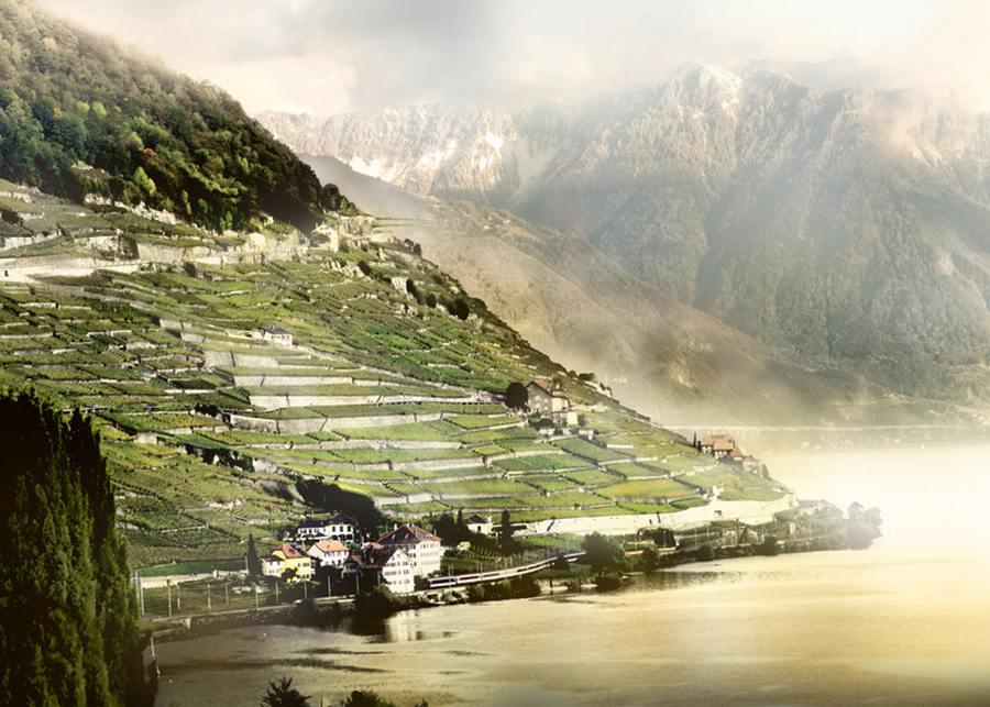 Switzerland_lavaux_vineyard_10