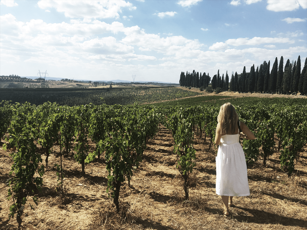 Tuscany_vineyard_002