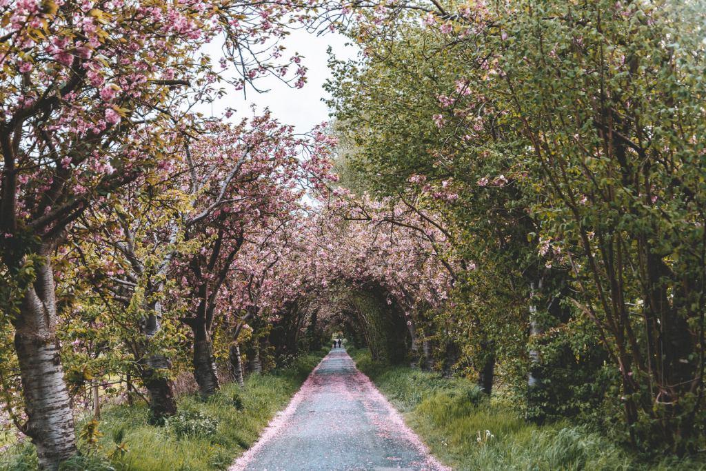 bloesempad met bomen