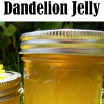 Dandelions are more than just weeds! They also make a delicious, floral jelly that tastes just like honey. This is the perfect afternoon project for kids & first-time canners, but you don't need to know about water-bath canning to make this incredibly jelly. It also stores great in the refrigerator. Capture the taste of summer all year long!