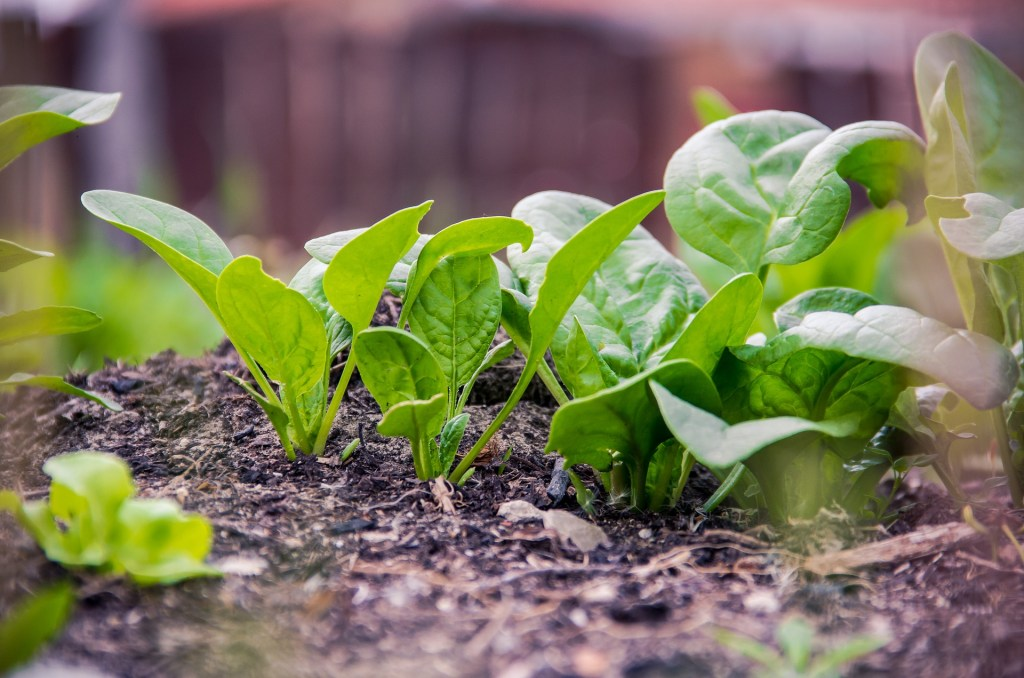Vegetables to Plant in Late Summer for Your Fall Garden