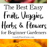 If you're gardening for the first time this year, we can help. Here's our list of the top 25 fruits, vegetables, herbs, & flowers for beginner gardeners. All of the plants are easy to grow and have a high yield. Start planning your garden today!