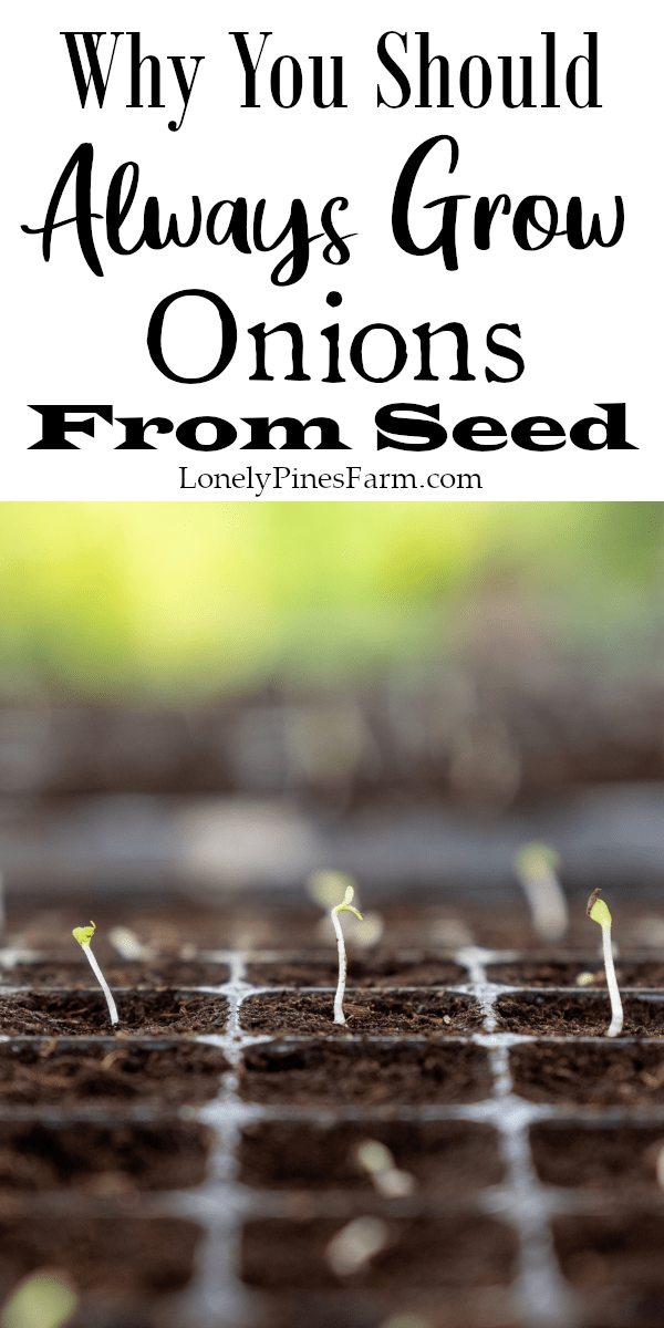 Why You Should Always Grow Onions From Seed