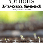 Can you grow onions from sets? Possibly. Should you grow onions from sets? We wouldn't recommend it! In this post we walk you through the reason why you should always grow onions from seed. Plus we include a tutorial on the seed planting process.