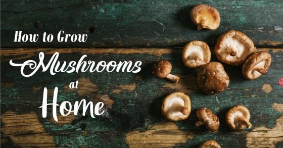 Growing Shiitake Mushrooms at Home