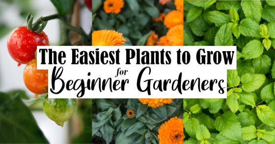 Top 25 Easy Plants for Beginner Gardeners