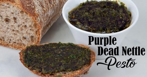 Purple Dead Nettle Pesto