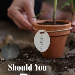 Are you having trouble growing fruit, instead of leaves? Are your tomato plants not really thriving? Then they could be in need of a trim! We'll walk you through the benefits of pruning tomato plants, some pitfalls to look out for, and basic pruning techniques - perfect for beginner gardeners!