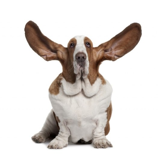 The Battle Between The Ears | Professional Services Sales Experts | Lonestar