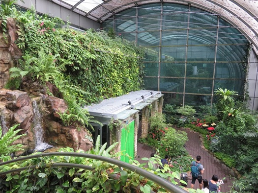 the Butterfly garden at Changi airport,Singapore was a must-visit