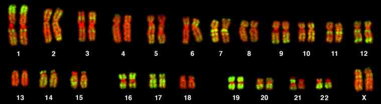 genetic testing chromosomes