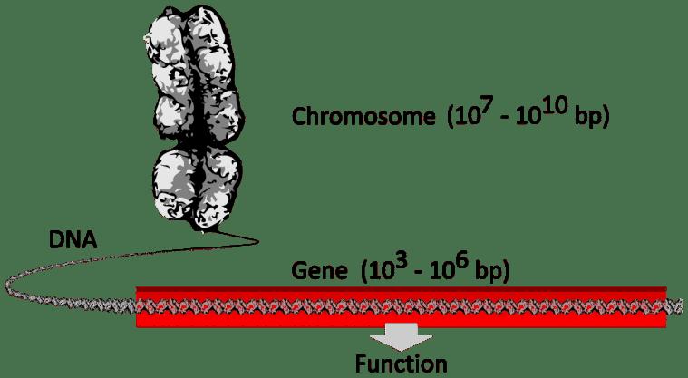gene genetic testing