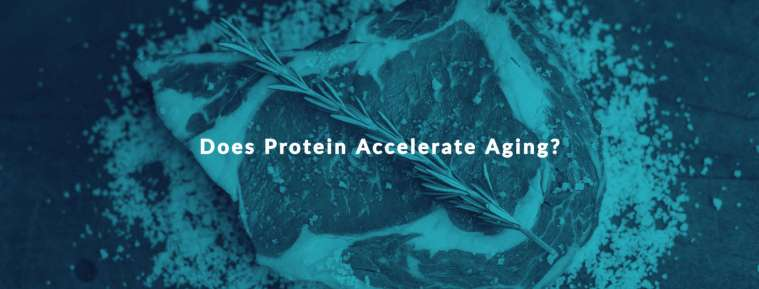does protein accelerate aging