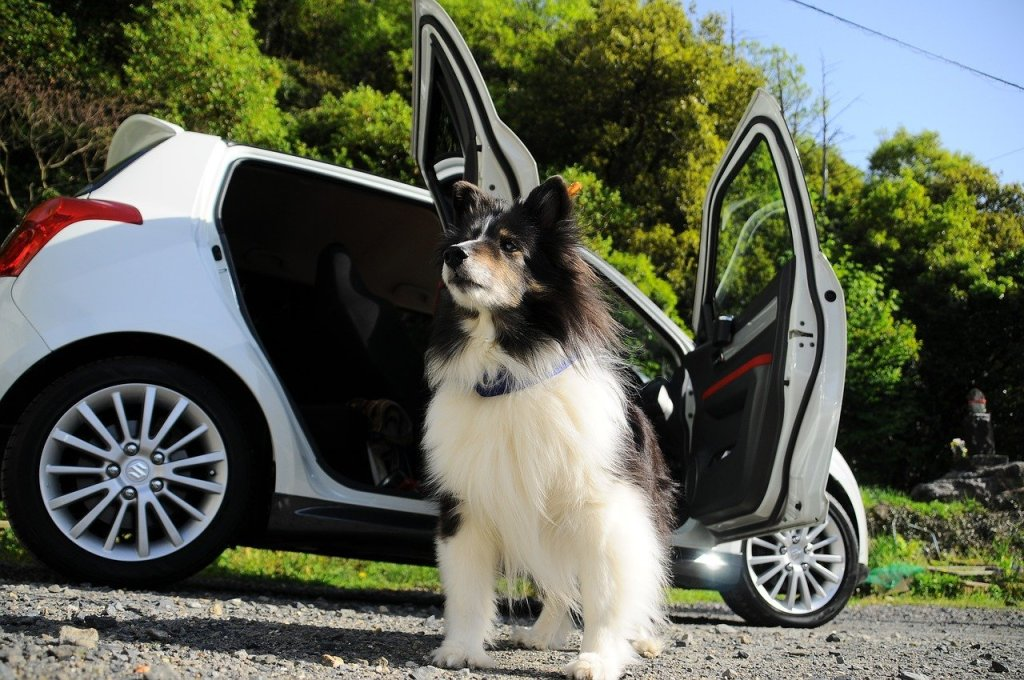 Keeping Your Dog Safe On the Road
