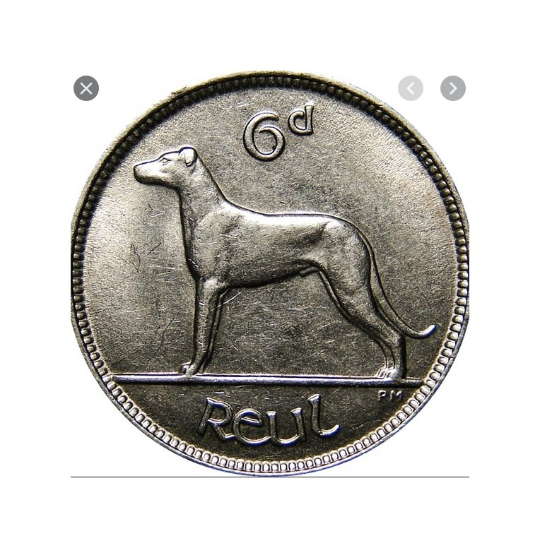 The Numismatic Dog – Dog Coin Collecting
