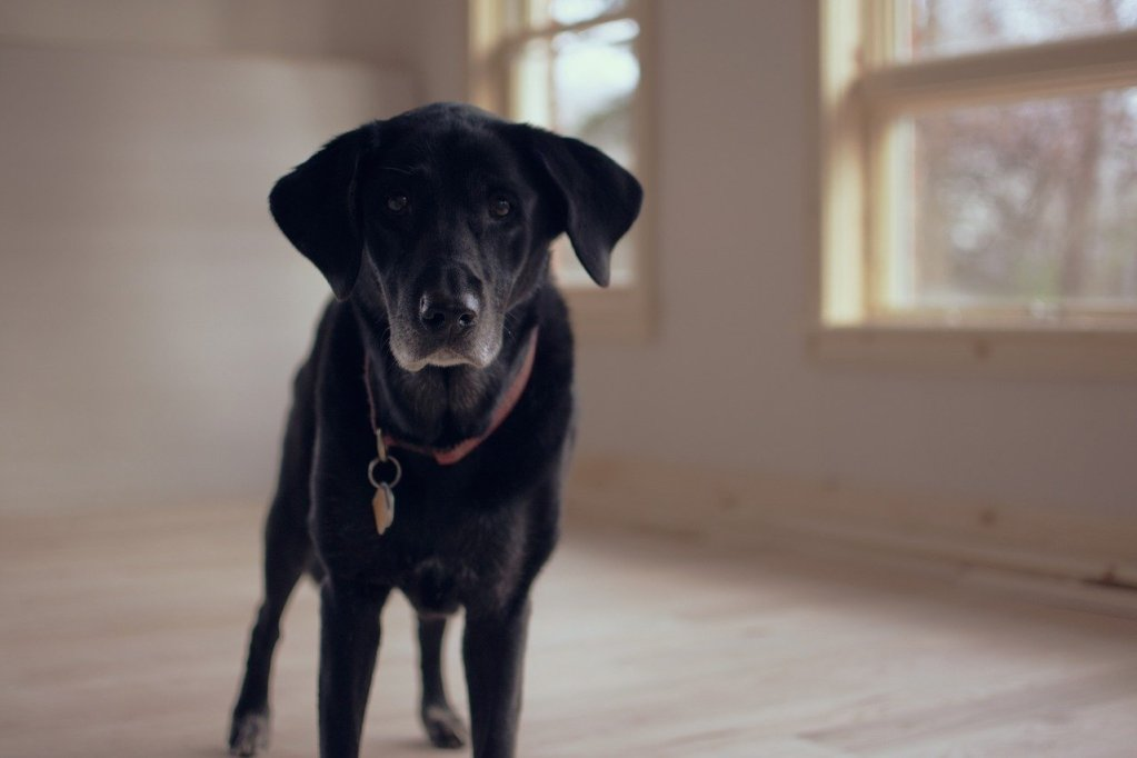 Re-housebreaking Your Mature Dog