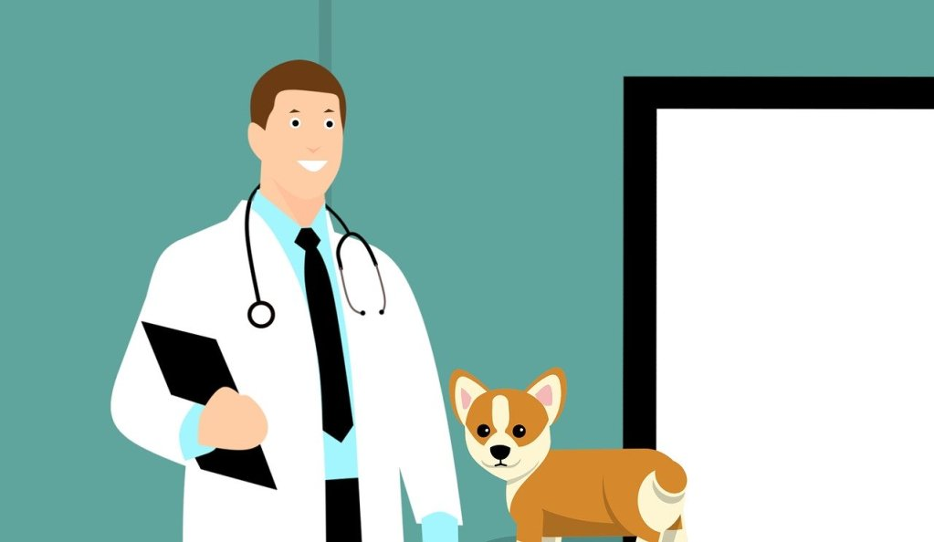Veterinarian Visit – Your First Meeting With A Brand New Veterinarian