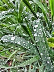 grassdrops
