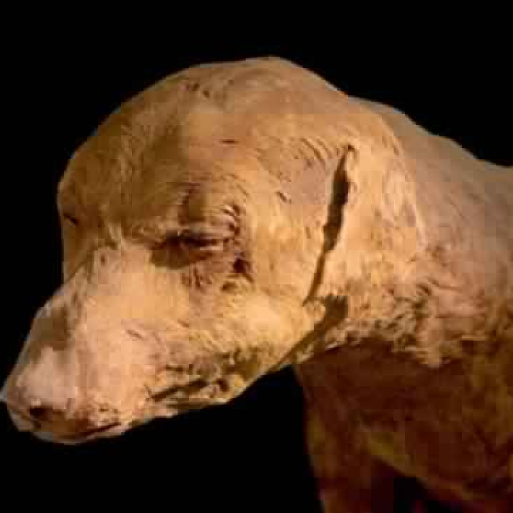 Animal Mummification Of Ancient Egypt