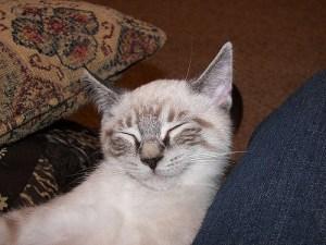 Happy cat customer