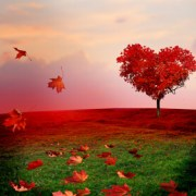 Love Is Beautiful, by Looking Beyond Master Psychic Readers. Call 1-800-500-4155 now!