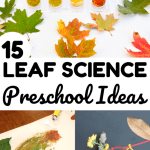 15 Simple Leaf Science Activities For Preschoolers Look We Re Learning