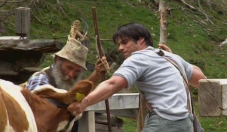 Carsten Spengemann kämmpft mit einer Kuh