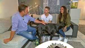 """""""Der V.I.P. Hundeprofi"""" mit Joey Heindle, Anna-Maria Zimmermann und Mario Galla - TV"""